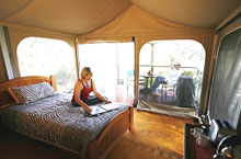 Jabiru Safari Camp, Queensland, Australie