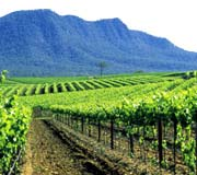 Hunter Valley, New South Wales - Australie